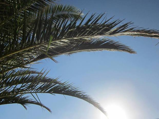 Palmtrees in Areia Branca